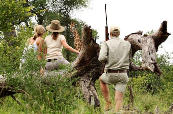 Mala Mala Game Reserve guided walking safari.