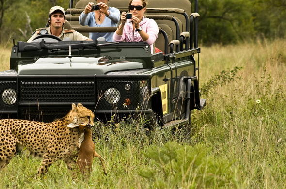 Watch cheetah catch their prey on action-packed game drives.