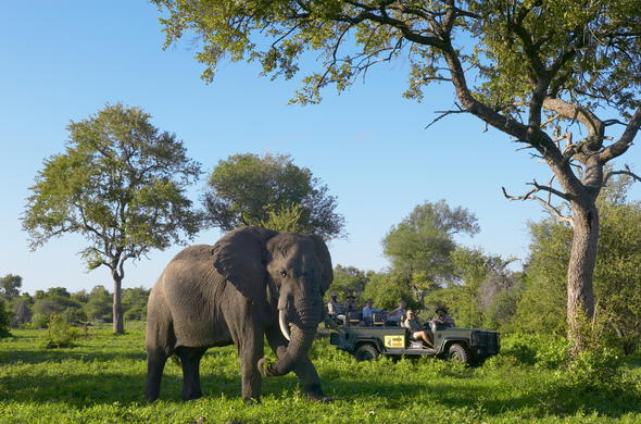 Enjoy game drives and spot the big five in the Mala Mala Private Game Reserve.
